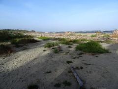La plage à l'embouchure du Tavignanu
