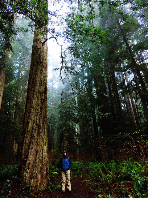 Prairie Creek Redwoods State Park, CA, USA