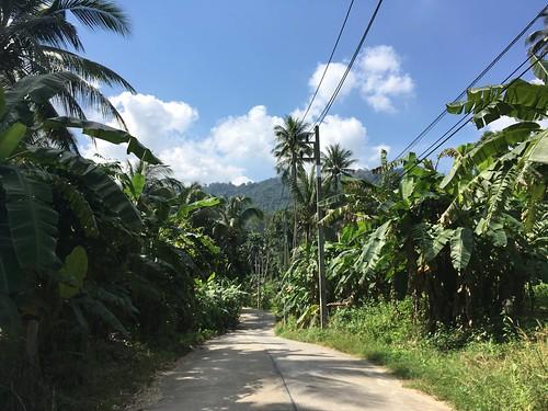 Koh Samui Coconuts Road
