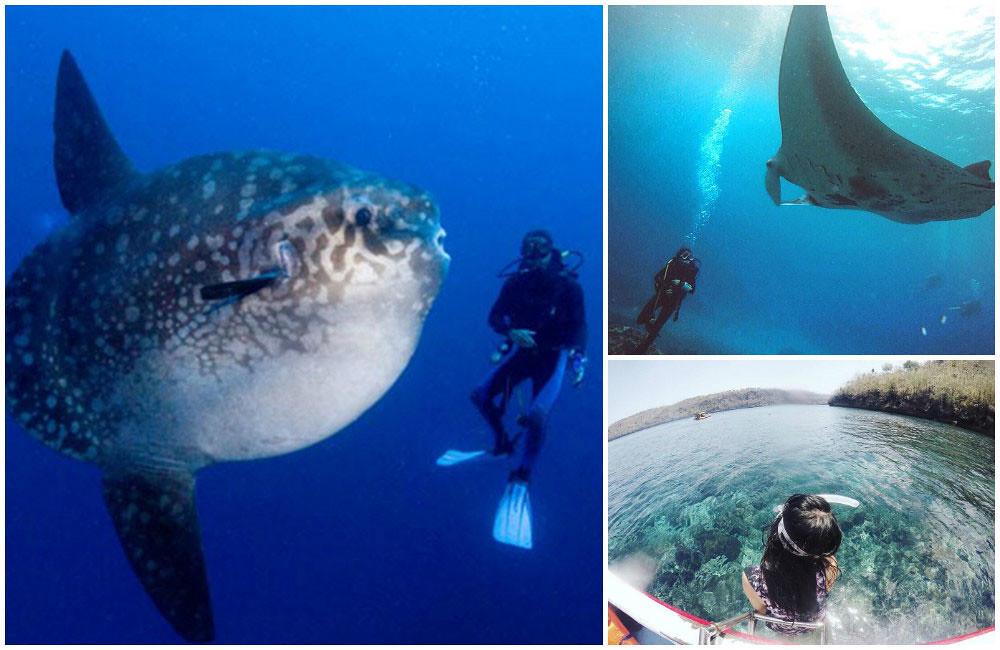 4c-diving-by-hypebali,-sellysylvia