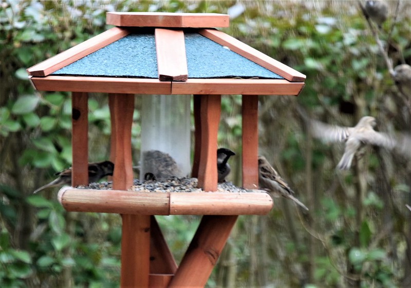 Sparrows 05.03 (1)