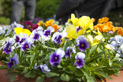 Chalcroft House Garden Improvements Part 2 | By Bristol City   Council ...