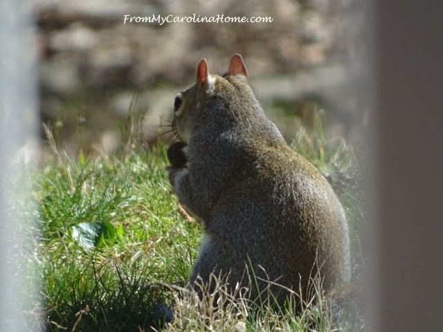 Squirrel March 2017