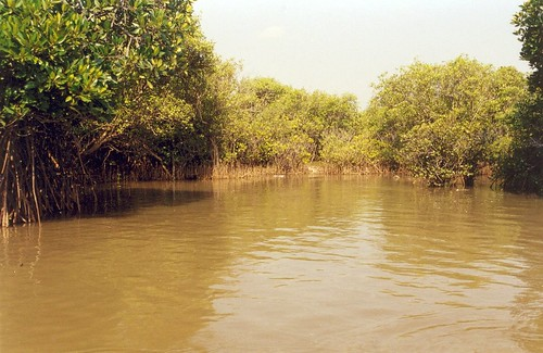 Another view of the Mangroves | by Anand Krishnamoorthi
