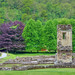 Rievaulx Abbey Ruins & Purple Tree