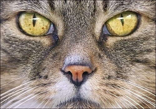 cats eyes | by adrians_art