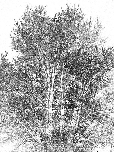 Tree Sketch | Tendrillic tree... Sketch treatment of a flash ...