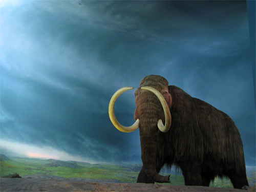 Woolly Mammoth | by rpongsaj