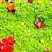 sadie's moss garden