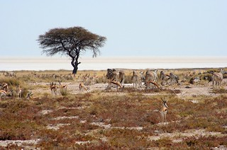Etosha National Parc, Namibia | by ironmanixs