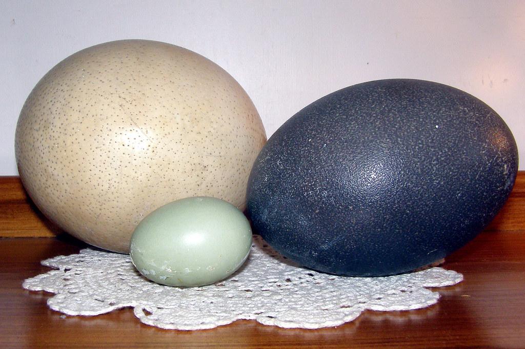 Ostrich egg..Emu egg ......Daffys egg! :>) | The Ostrich and… | Flickr
