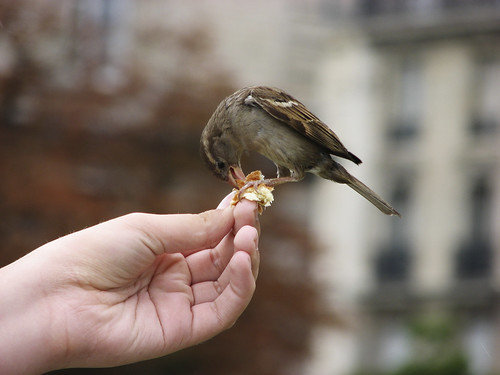 Paragraph-A bird in hand is worth two in a bush ?