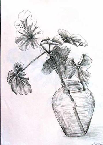 Geranium In Vase Pencil Sketch Done For Drawing For Garde Flickr