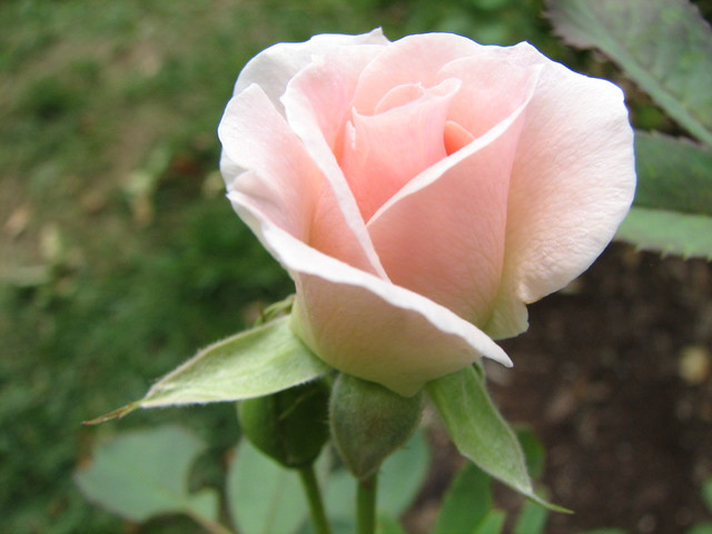 rosebud kläder gratis  mobil