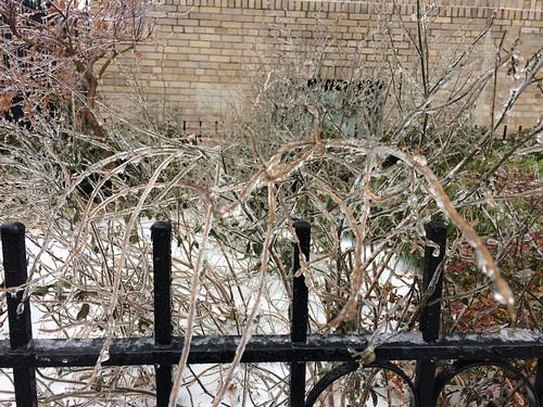 First snow, December 17