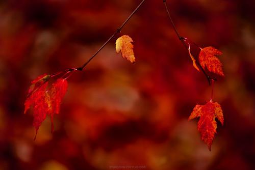 Photographer Curtis Cunningham - autumn