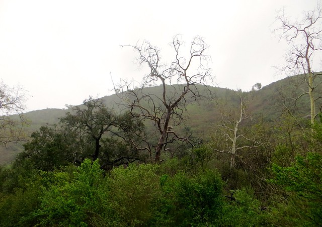 solstice canyon rainy day
