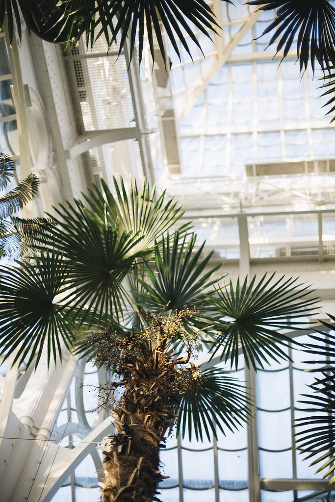 Blog The Curly Head, Palmenhaus Vienna, Photography by Amelie Niederbuchner, Wien, Travel Diary, MB1_9658edkomp