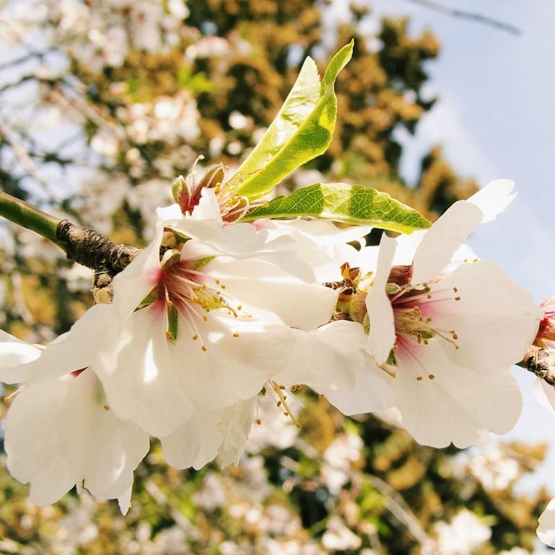 Happy Spring Equinox! Filter: 50% #Vista by @Pomelocam. photo #Fujifilm: ©Dolci Fusa