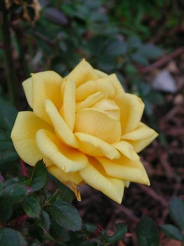 les voeux de mon jardin 32199062171_13e41273c6