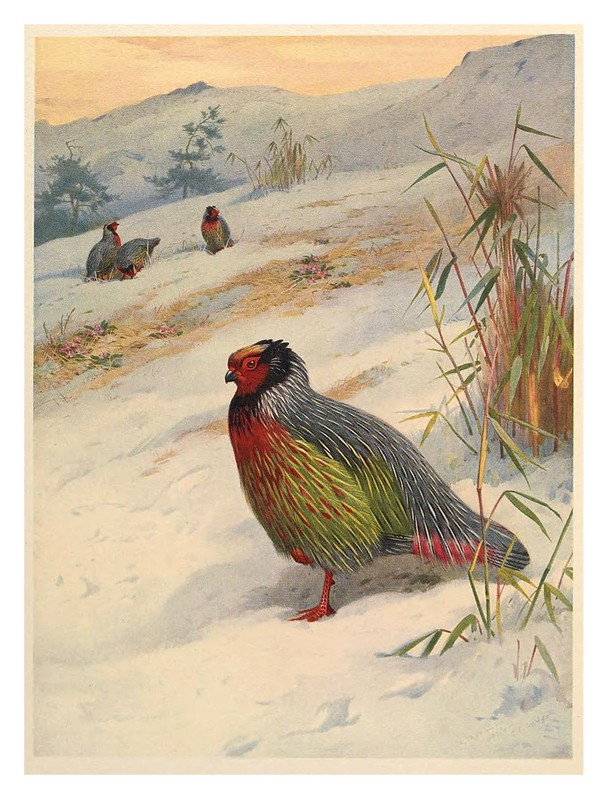 001-A monograph of the pheasants-1918- Tomo 1