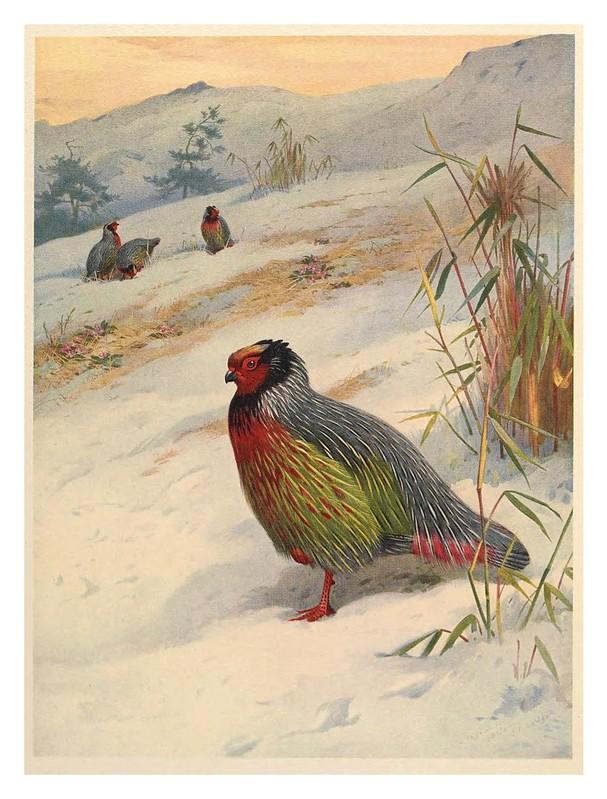 001-A monograph of the pheasants-1918- Tomo 1