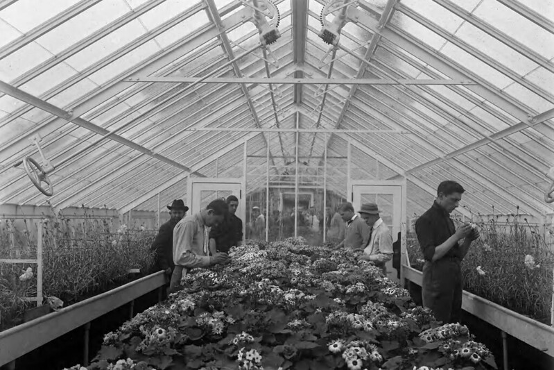 Interior, greenhouse