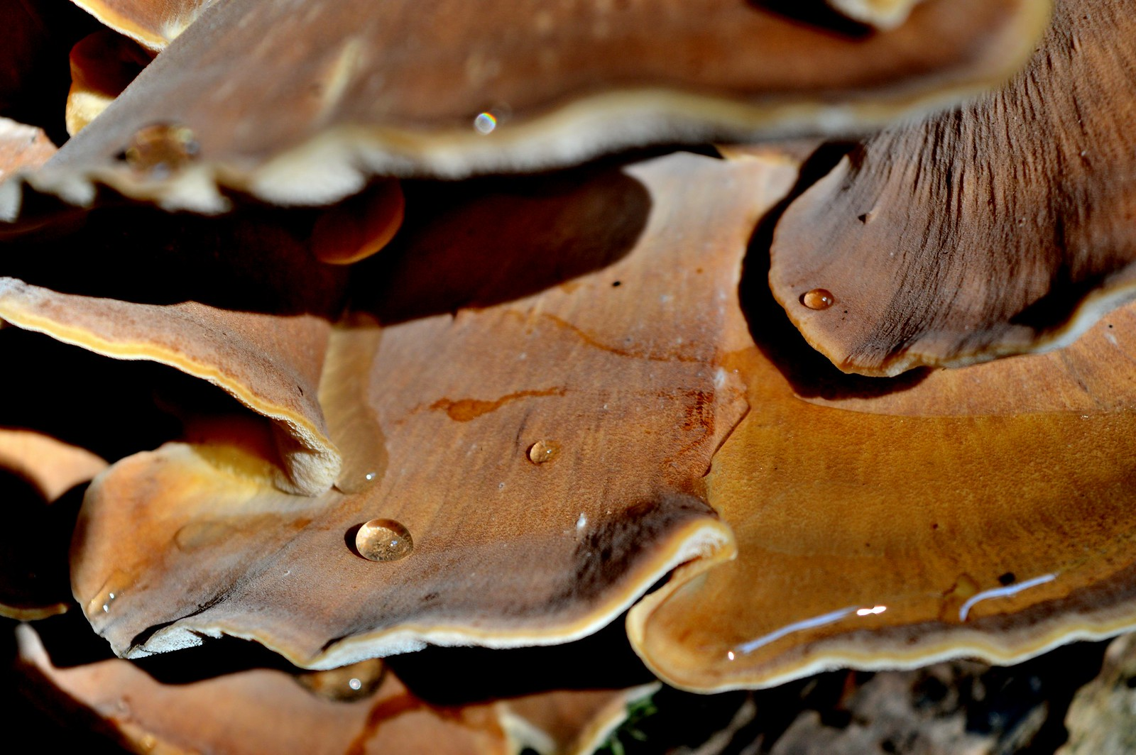 Water droplets on a mushroom.