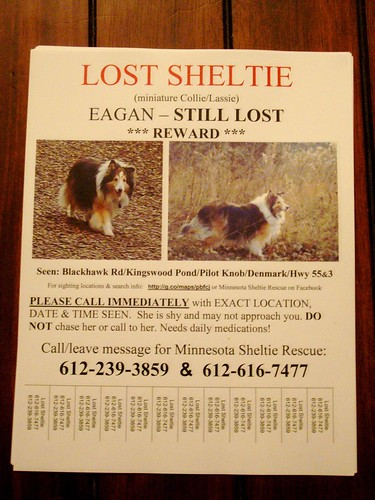 Cupcake's Lost Dog Flyer #2