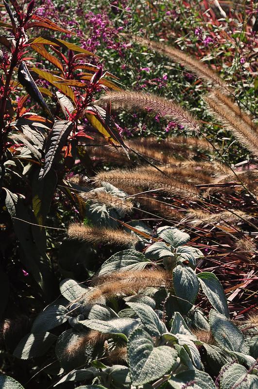 Longwood Idea Garden (2)