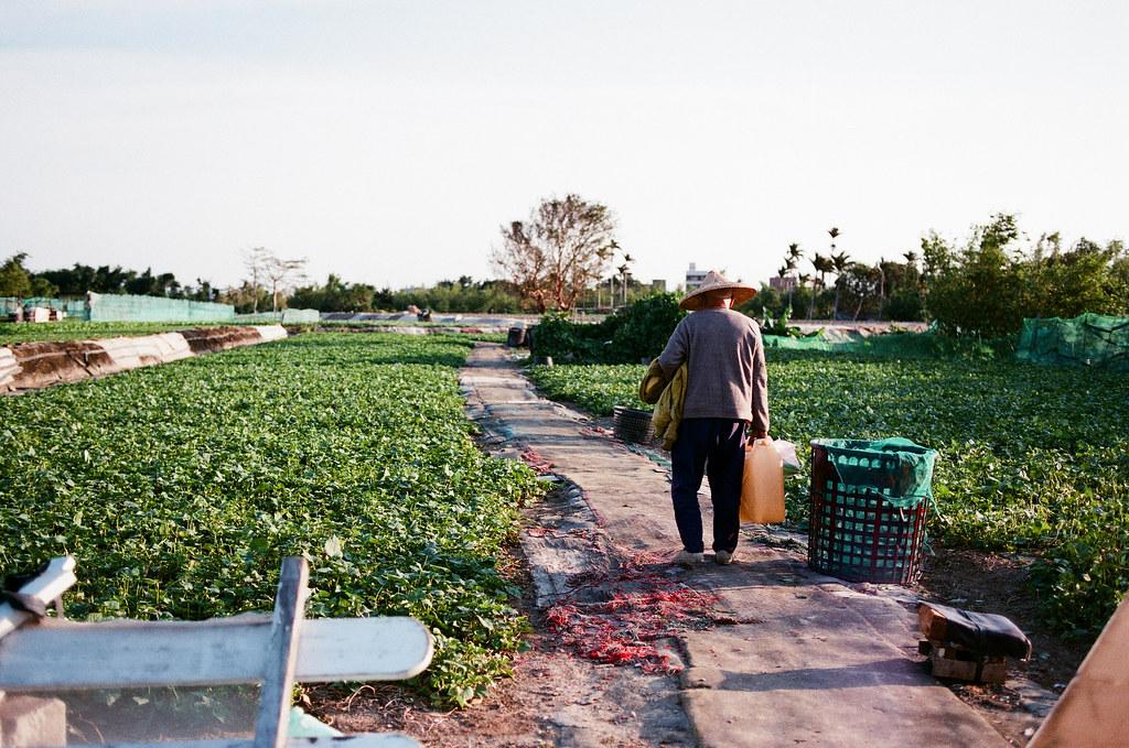 社子島目前仍有大規模的耕作活動,這不僅有利於延續長輩的活動力,也有利於台北市田園...