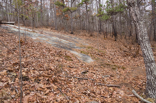 Path to Upper Grassy Creek Falls - 5