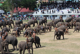 A lot of elephants