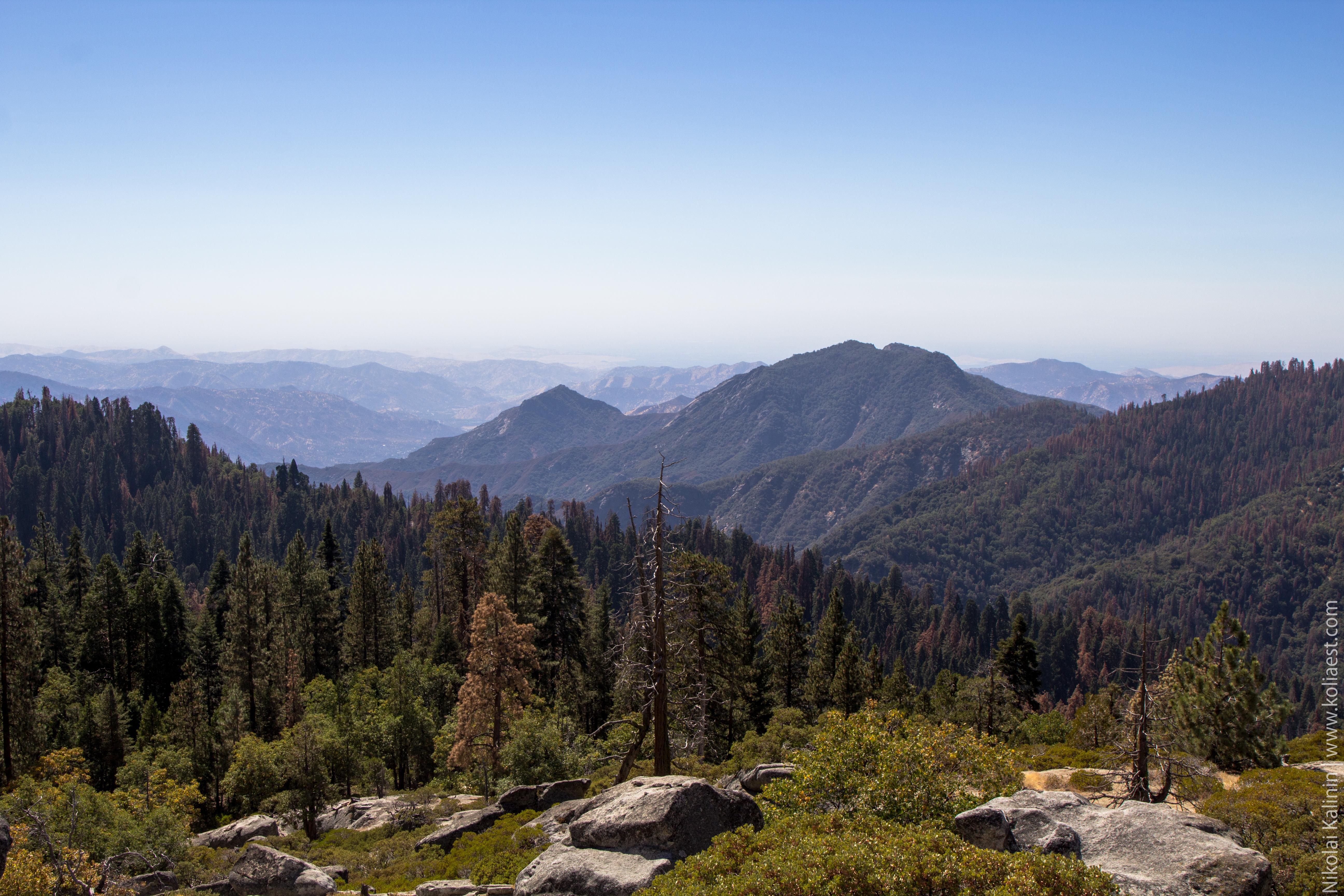Sequoia-30