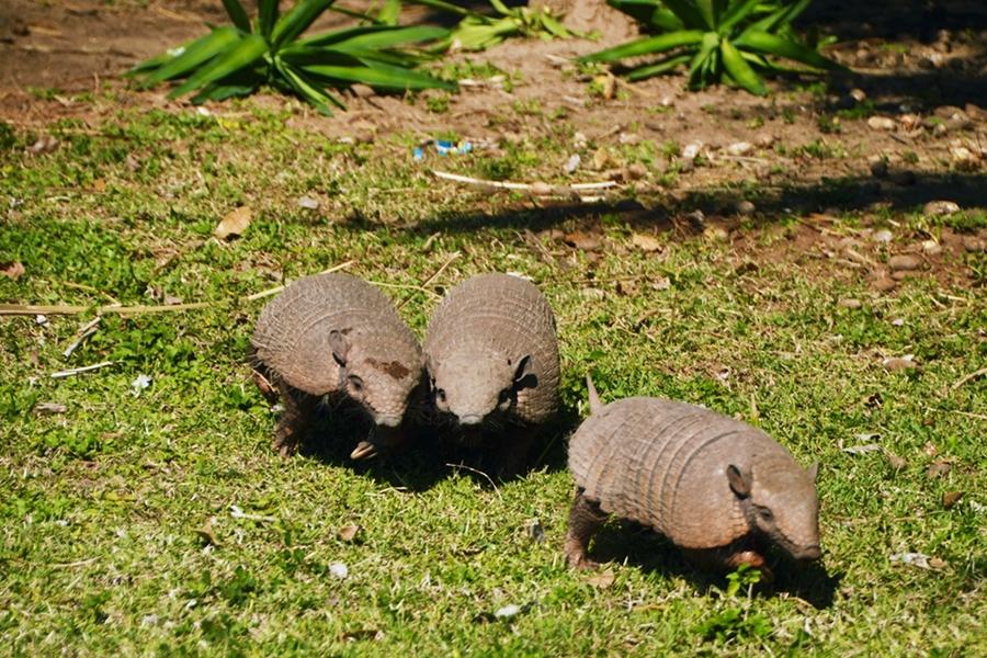 pantanalanimals25