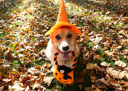 Happy Halloween! | by Lottie's pets & stuff