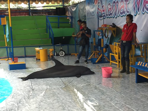 bored staff wait with dolphin out of water