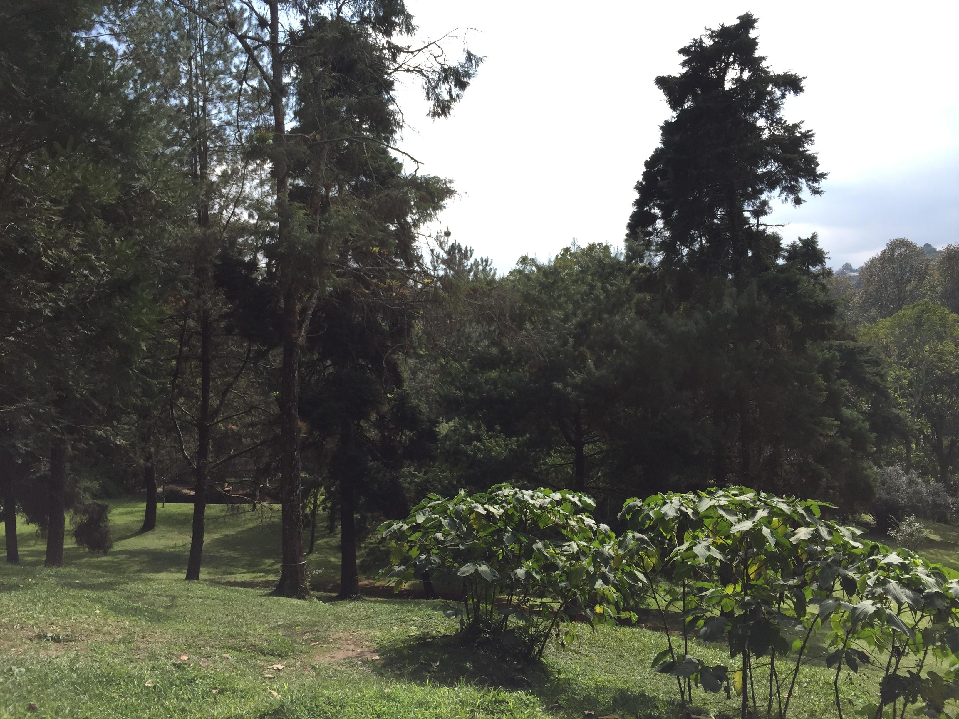 Rboles del jard n bot nico de xalapa for Arboles del jardin botanico
