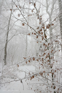 White January | by herz-allerliebst