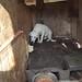 Ansan Dog Farm Hell_18.mp4