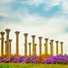 Capitol Columns.  Fall at the US National Arboretum.