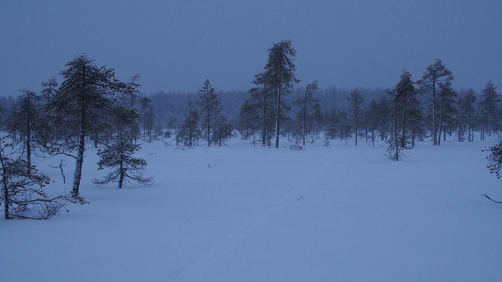 26.12. Tapaninpäivän hiihtelyä suolla.