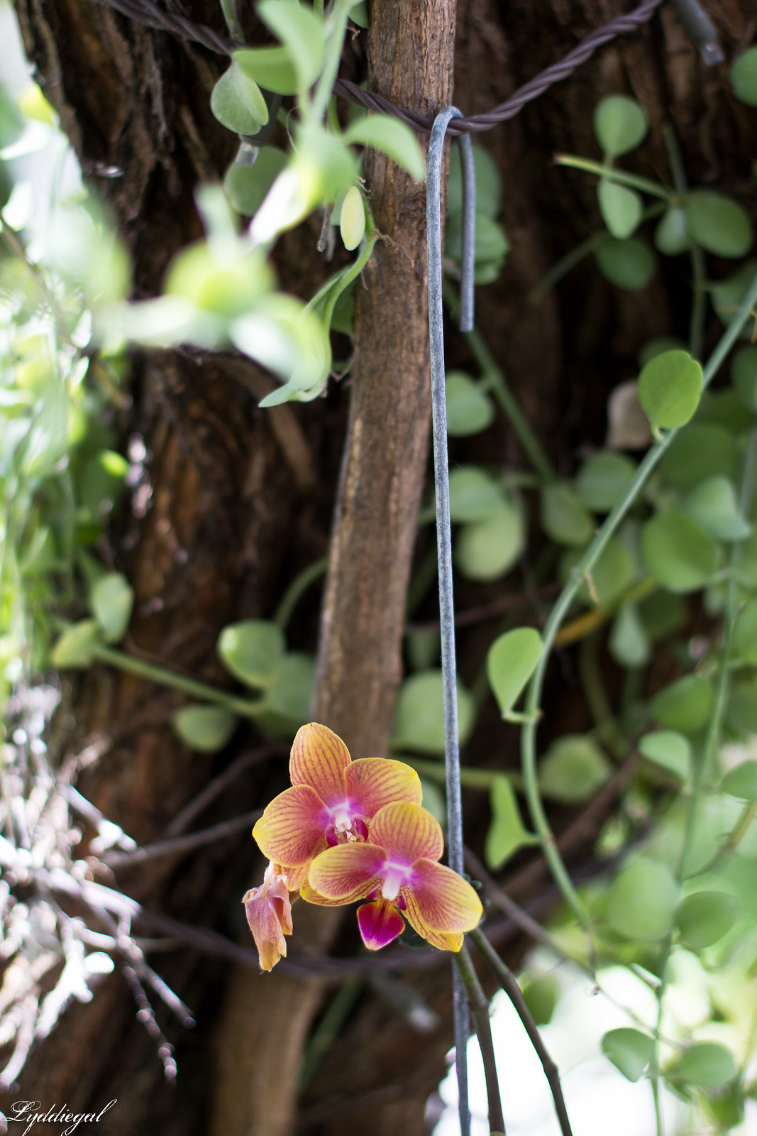 orchid at Nikki Beach.jpg