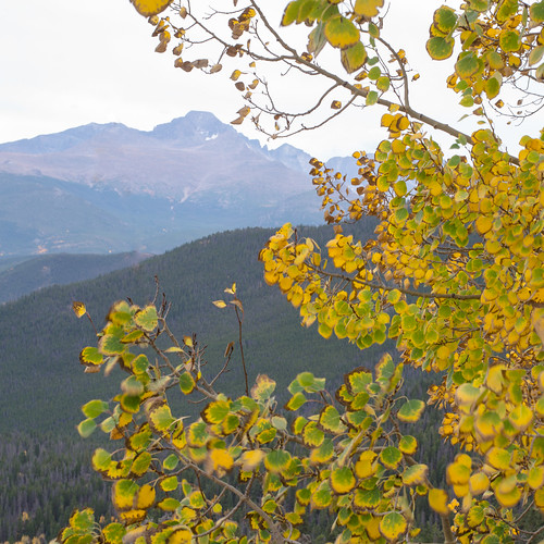 Aspen and mtn | by julesberry2001