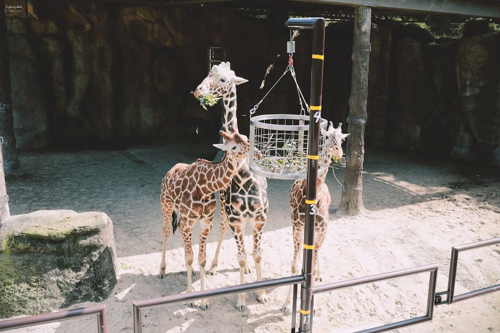 木柵動物園小記,NO.2