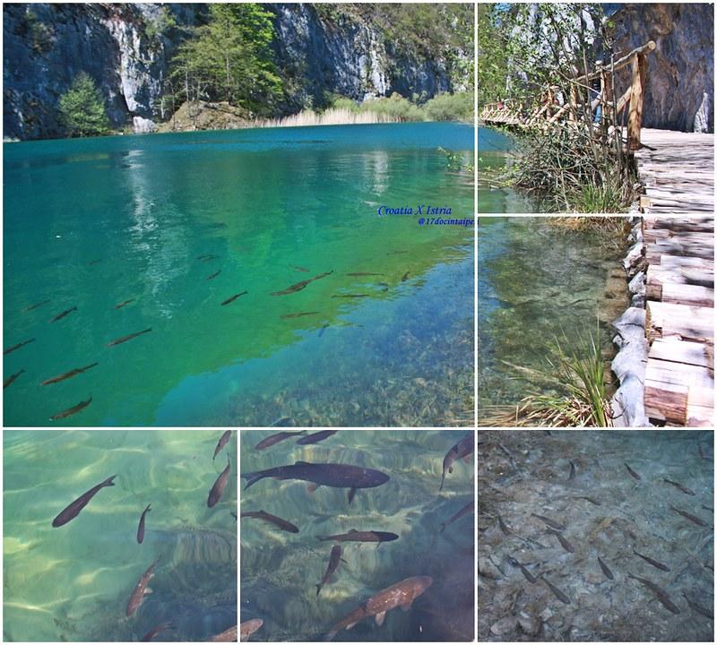 croatia-Plitvice LakesNational Park -克羅地亞-16湖國家公園-17docintaipei (6)