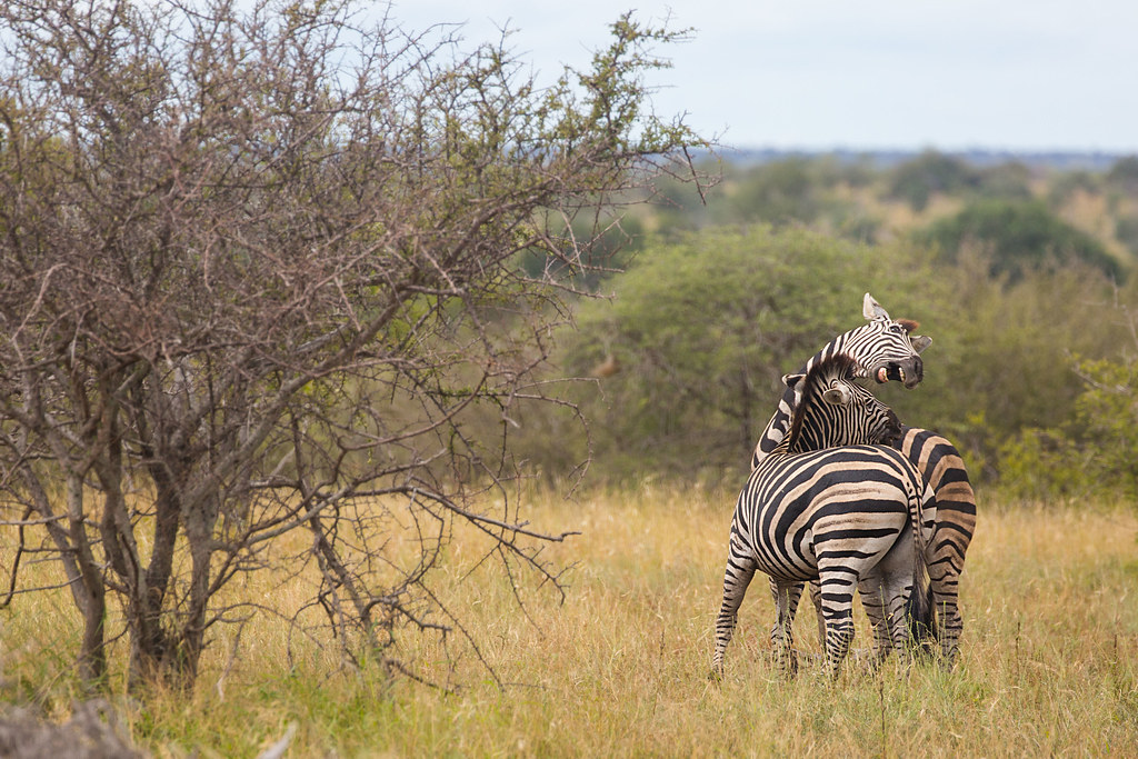 a two week trip to kruger national