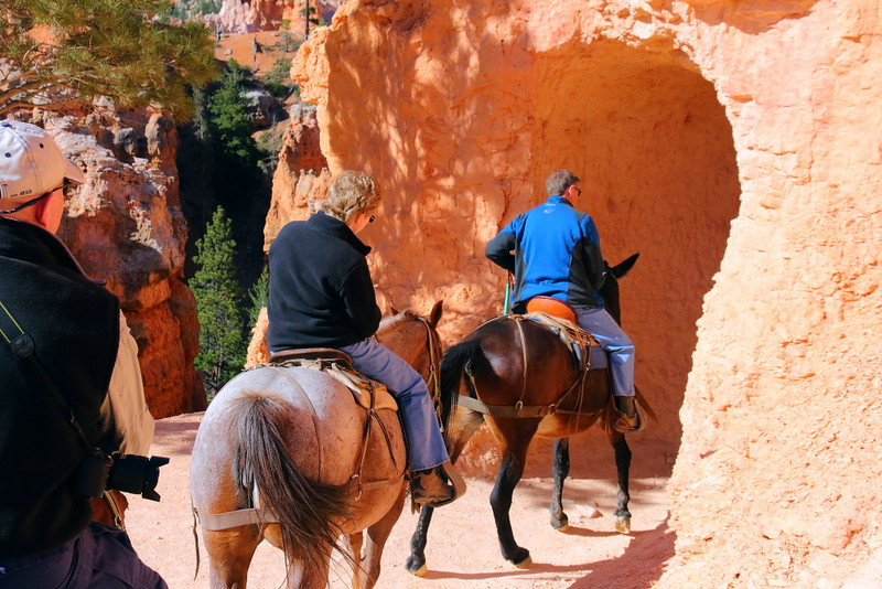 IMG_4636 Mule Ride, Bryce Canyon National Park