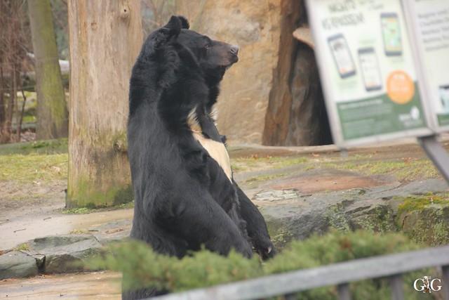 Besuch Zoo Berlin 26.02.201737