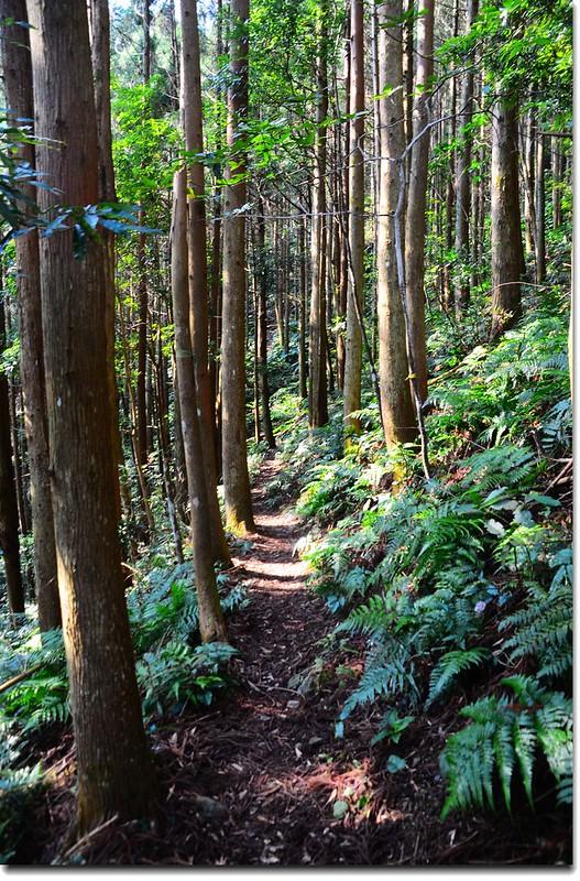 高台山登山步道 1